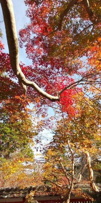 京都の紅葉はいかがですか?_d0380390_01051238.jpg