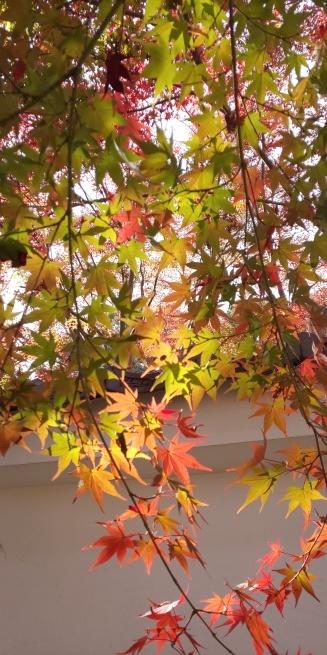 京都の紅葉はいかがですか?_d0380390_01074227.jpg