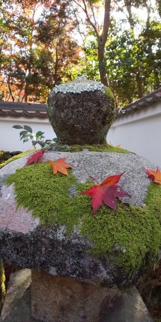 京都の紅葉はいかがですか?_d0380390_01094216.jpg