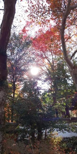 京都の紅葉はいかがですか?_d0380390_01150859.jpg