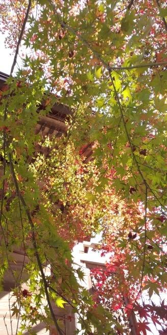 京都の紅葉はいかがですか?_d0380390_01162369.jpg