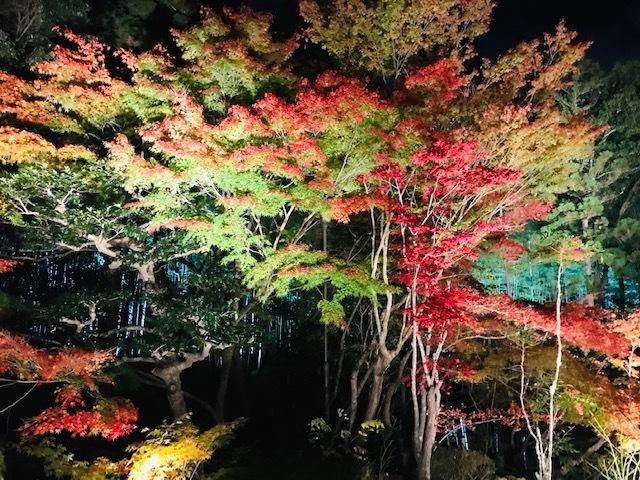 鞍馬寺、宇宙のパワースポット。永観堂紅葉を見る。_a0050302_01333440.jpg