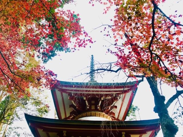 鞍馬寺、宇宙のパワースポット。永観堂紅葉を見る。_a0050302_01344159.jpg