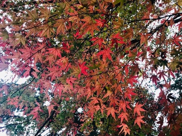 鞍馬寺、宇宙のパワースポット。永観堂紅葉を見る。_a0050302_01345058.jpg