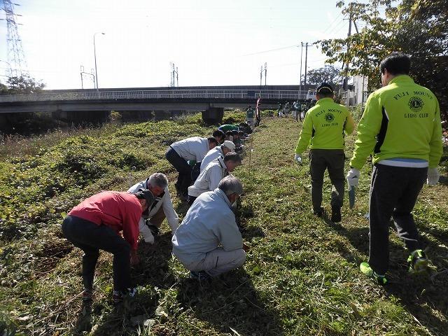 市内5つのライオンズクラブさんからも支援いただき今年は3000球のヒガンバナを植付け 「滝川の水辺 守ろう!遊ぼう!プロジェクト 2018」_f0141310_06440324.jpg