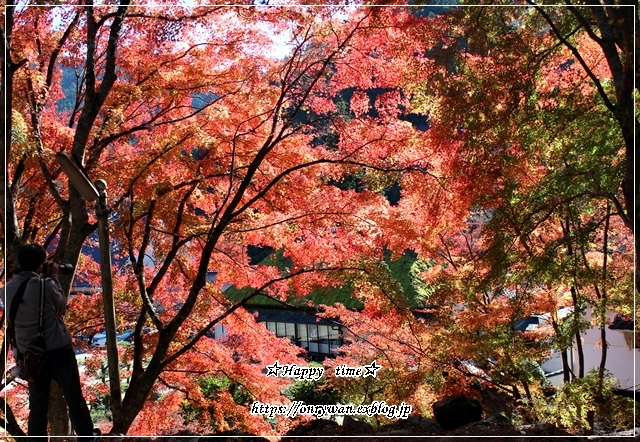 そうだ!紅葉を見に行こう♪_f0348032_18281972.jpg