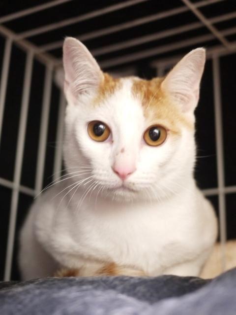 猫のお留守番 猫吉くん編。_a0143140_22301800.jpg