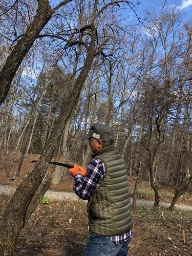 ノリウツギの伐採作業_c0341450_15401902.jpg