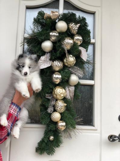 クリスマスリース_f0126965_06304015.jpg