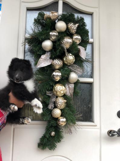 クリスマスリース_f0126965_06304164.jpg
