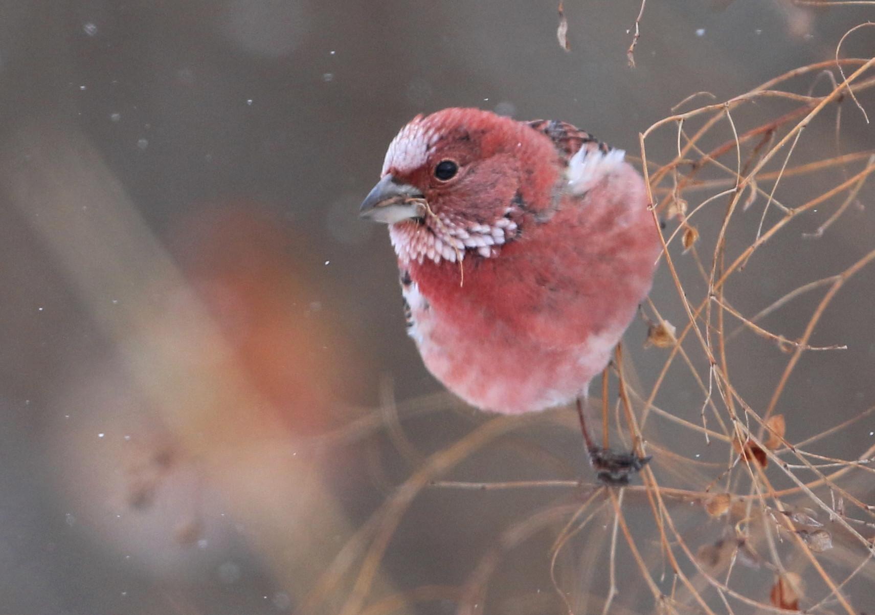 白い鳥 赤い鳥_c0229170_19570402.jpg