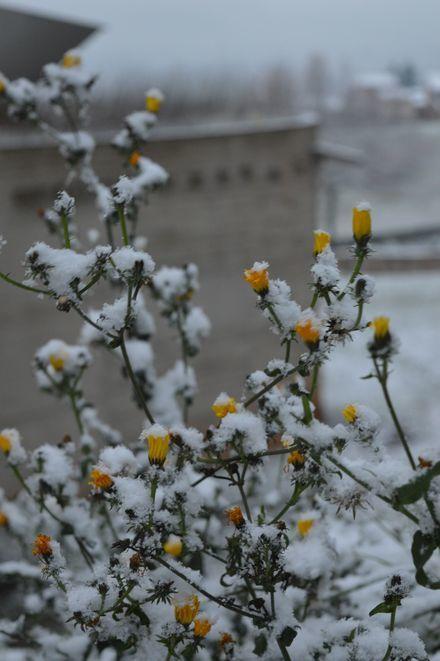 雪の修道院_b0346275_22405264.jpg