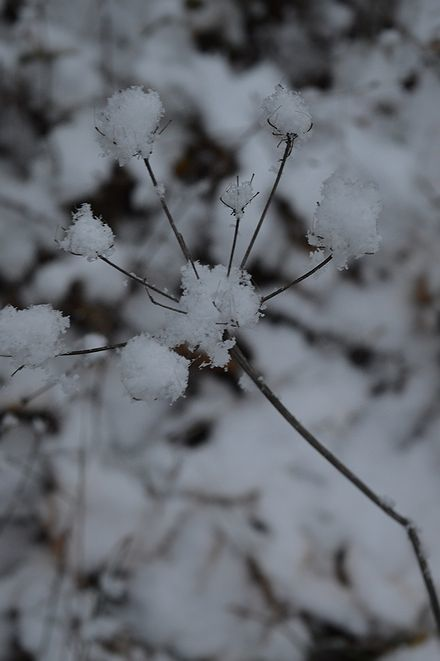 雪の修道院_b0346275_22483826.jpg