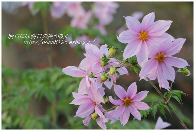 f0361079_18515234.jpg