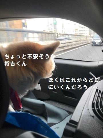 将吉くん&ピーコちゃん 新生活スタート!_f0242002_13565214.jpg