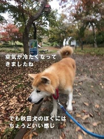 将吉くん&ピーコちゃん 新生活スタート!_f0242002_13574850.jpg