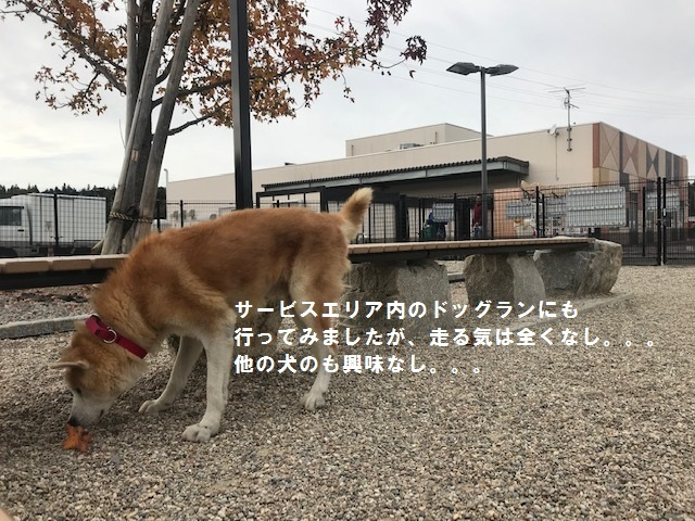 将吉くん&ピーコちゃん 新生活スタート!_f0242002_13580195.jpg
