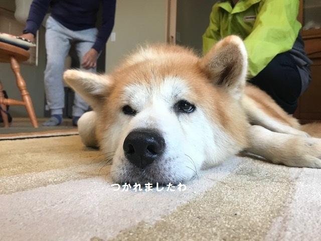 将吉くん&ピーコちゃん 新生活スタート!_f0242002_13581593.jpg