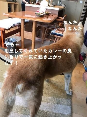 将吉くん&ピーコちゃん 新生活スタート!_f0242002_13582225.jpg