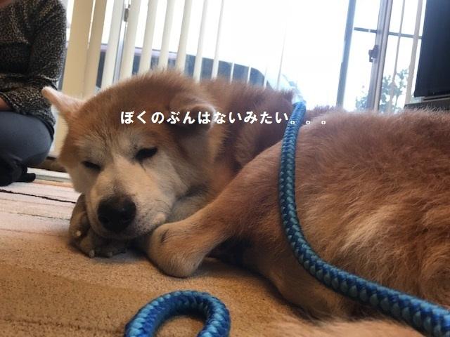 将吉くん&ピーコちゃん 新生活スタート!_f0242002_14051021.jpg