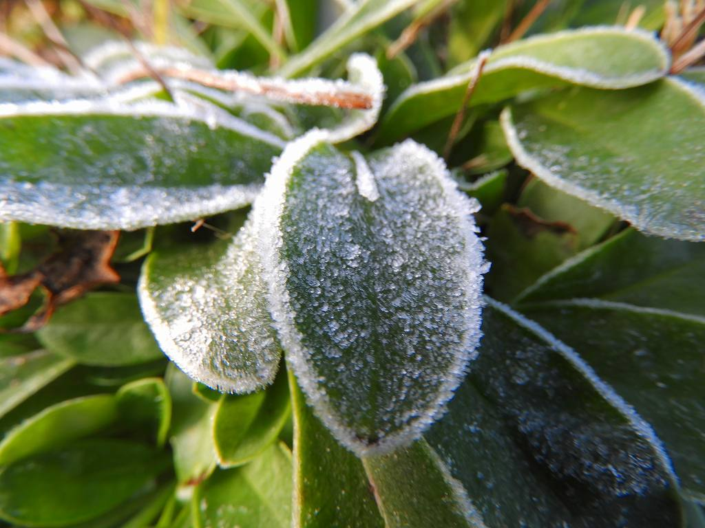 初霜の朝_e0372207_22492991.jpg
