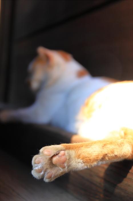 護国寺で猫撮影 - 1-_f0348831_20513379.jpg