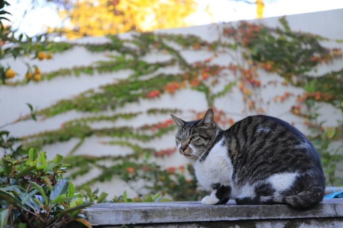 護国寺で猫撮影 - 1-_f0348831_20513498.jpg