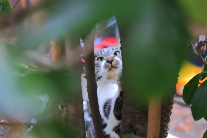 護国寺で猫撮影 - 1-_f0348831_20513983.jpg