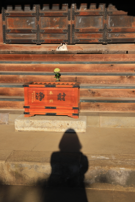 護国寺で猫撮影 - 1-_f0348831_20514608.jpg