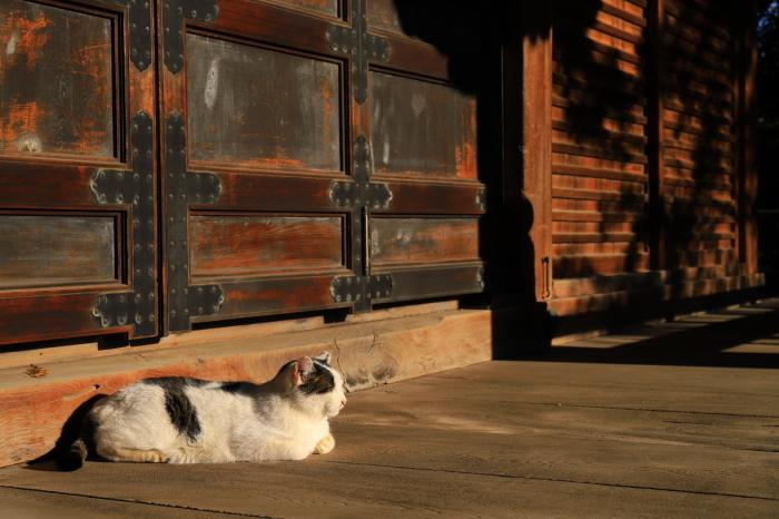 護国寺で猫撮影 - 1-_f0348831_20514739.jpg