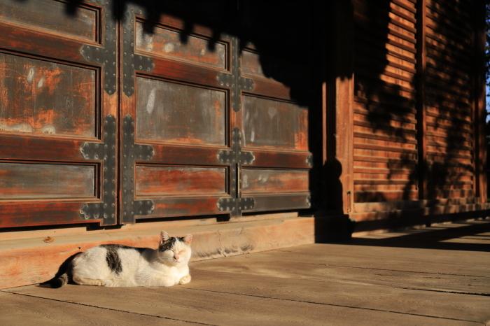 護国寺で猫撮影 - 1-_f0348831_20515063.jpg