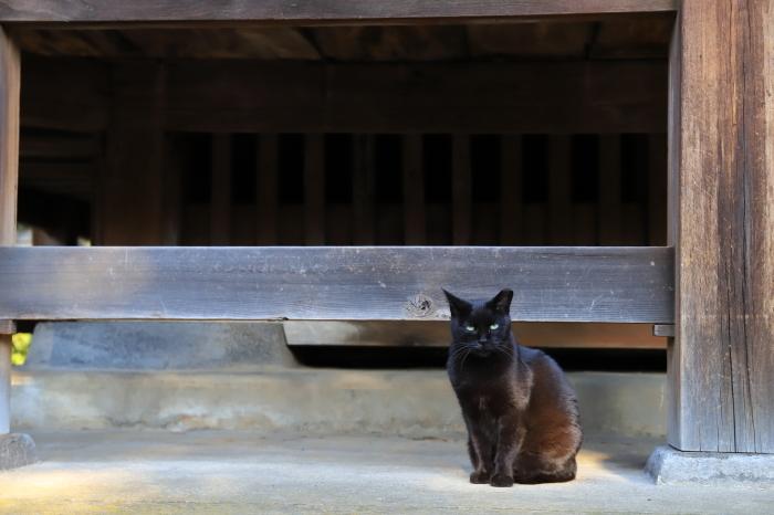 護国寺で猫撮影 - 1-_f0348831_20515105.jpg