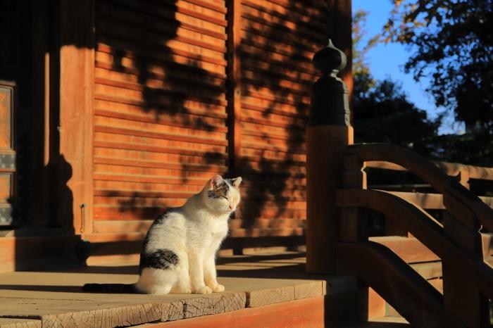 護国寺で猫撮影 - 1-_f0348831_20515165.jpg
