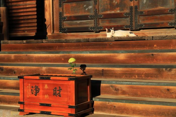 護国寺で猫撮影 - 1-_f0348831_20515808.jpg
