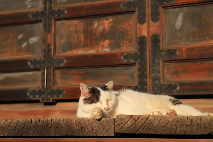護国寺で猫撮影 - 1-_f0348831_20515901.jpg