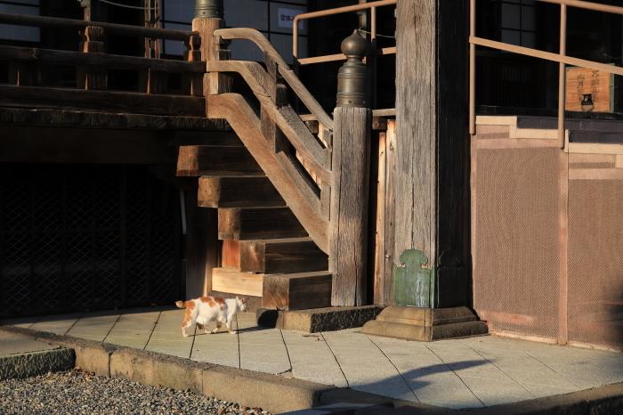 護国寺で猫撮影 - 1-_f0348831_20515965.jpg