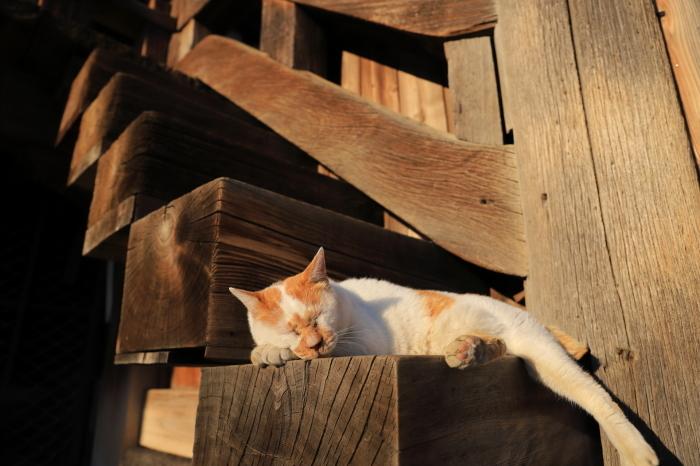 護国寺で猫撮影 - 1-_f0348831_20520059.jpg