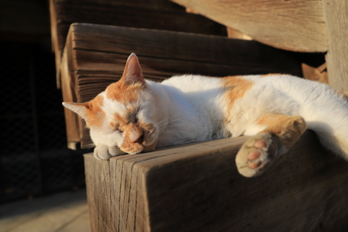 護国寺で猫撮影 - 1-_f0348831_20520454.jpg