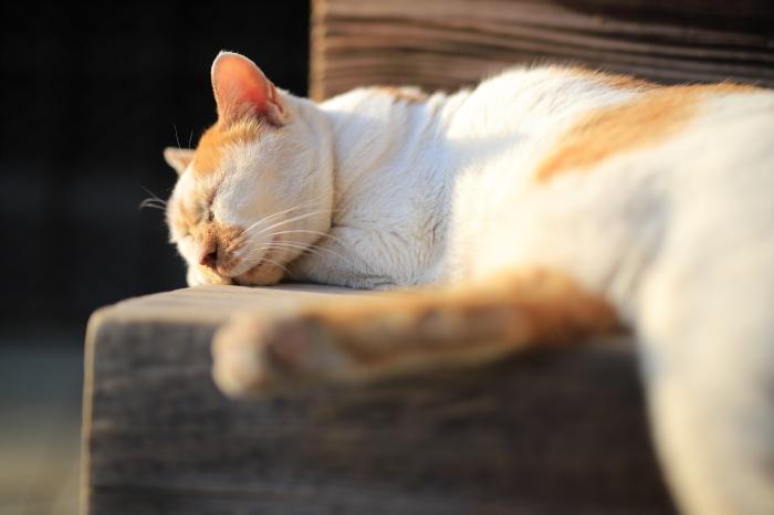 護国寺で猫撮影 - 1-_f0348831_20520540.jpg