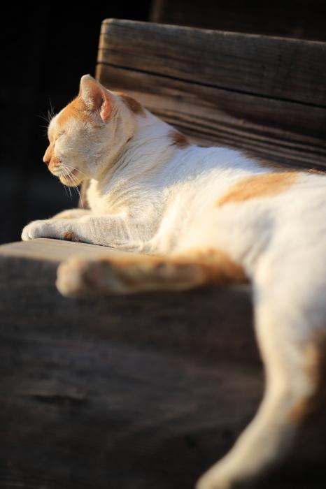 護国寺で猫撮影 - 1-_f0348831_20520565.jpg