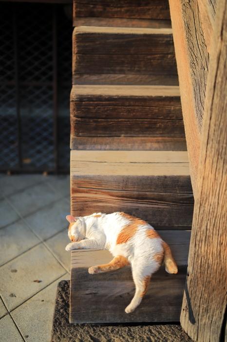 護国寺で猫撮影 - 1-_f0348831_20520922.jpg
