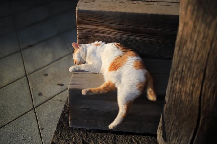 護国寺で猫撮影 - 1-_f0348831_20520944.jpg