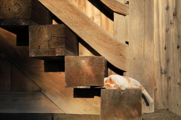 護国寺で猫撮影 - 1-_f0348831_20522543.jpg