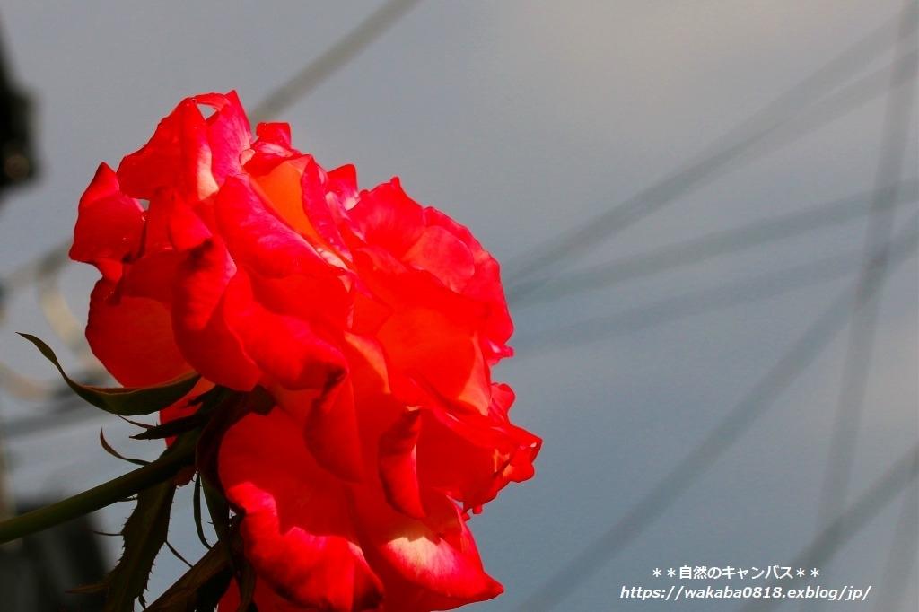 e0052135_18063114.jpg