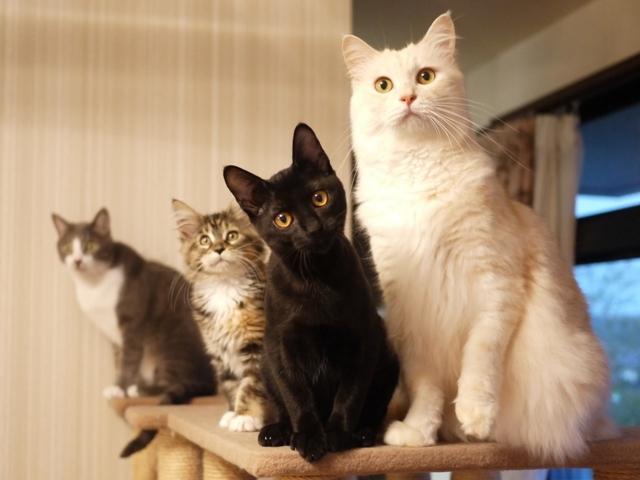 猫のお留守番 天ちゃん麦くん茶くん〇くんAoiちゃん編。_a0143140_20434661.jpg