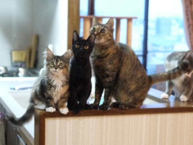 猫のお留守番 天ちゃん麦くん茶くん〇くんAoiちゃん編。_a0143140_20441907.jpg