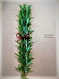 Botanical *design「ローズマリーを知る」第1回目。_e0254750_08480051.jpg