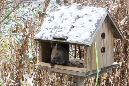 雪が積もったね、エゾリスさん~11月の旭川_d0340565_19541588.jpg