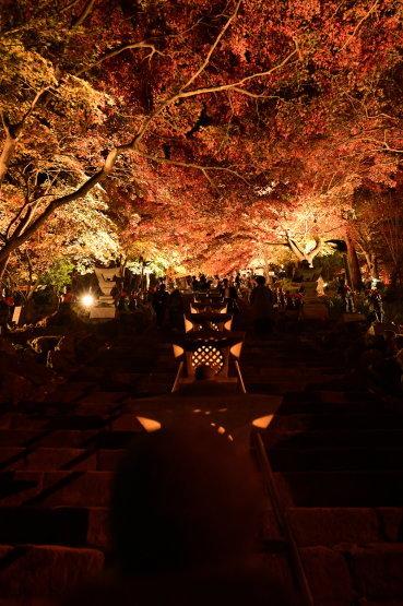 神奈川県 大山紅葉散策_f0110195_19414962.jpg