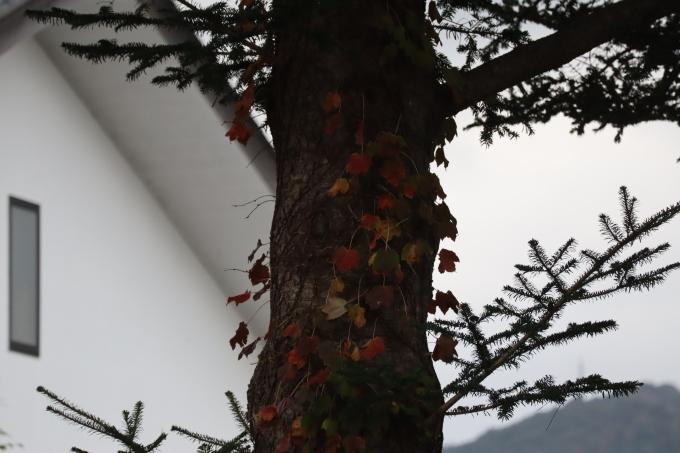 冬が来る!  オープンデー 最終話_b0239402_17104516.jpg
